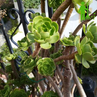 beskar buske have